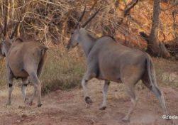 Global Dutchies Blog Astrid Botswana